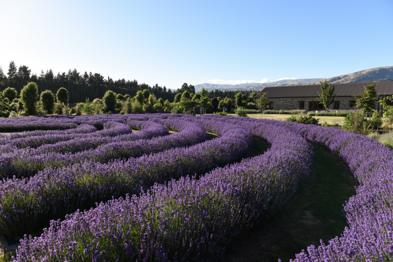 Wanaka Lavender Farm Website Version