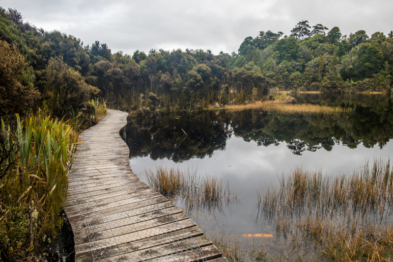 Catlins Forest Walkway Sam Deuchrass Website Version 1