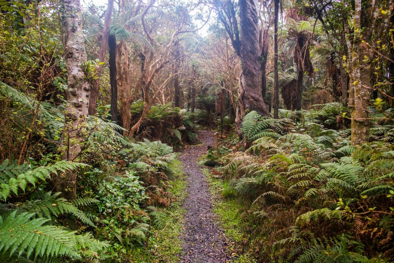 18 3 6045 Bush Walk Track Curio Bay The Catlins Sam Deuchrass No credit required 2